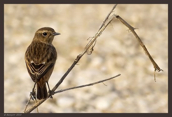 Lady Stonechat Try the original view  Seasons Greetings and Happy Holidays!
