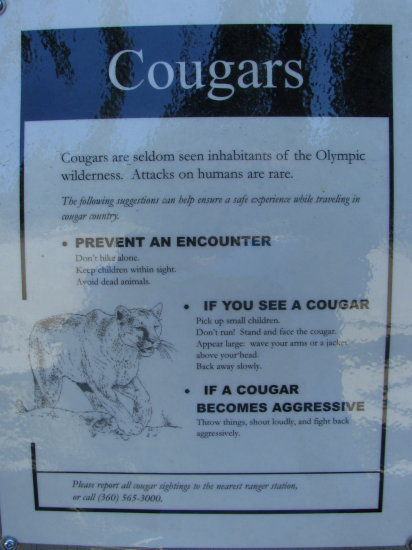 warning what to do sign cougars