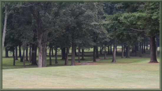 trees green golf course pine needles forest