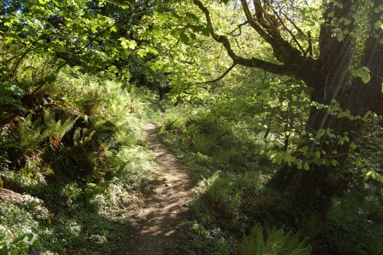 beckland woods brownsham north devon