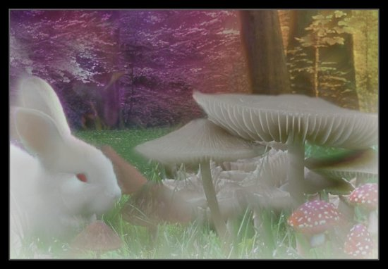 mushroomsrabbit trees digitalartclub