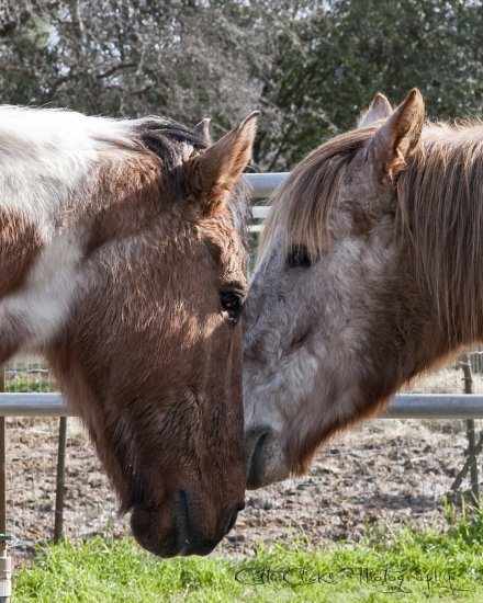 safe haven horse rescue cottonwood horses kiss valentinesfriday