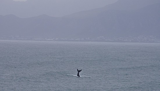 vacation africa gansbaai whale