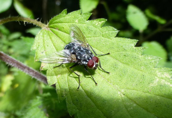 .......and the fly.