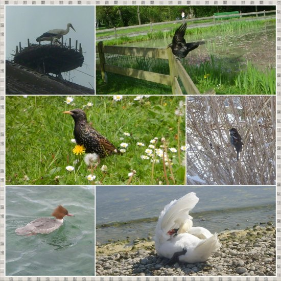 funfriday birds and waterbirds collage