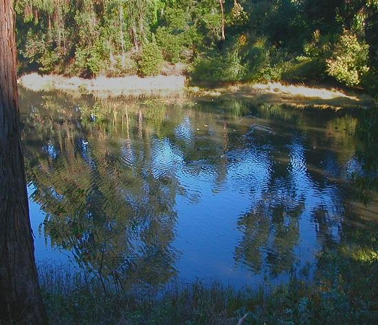 Secret pond in Mountain View Cemetery, Oakland. This is the middle one of three ponds; the first ...