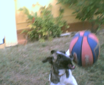 dog ball outdorrs