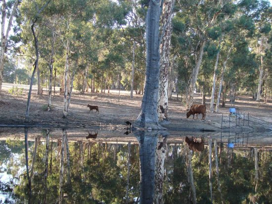 reflectionthursday mother child farm dam early morning perth hills littleollie