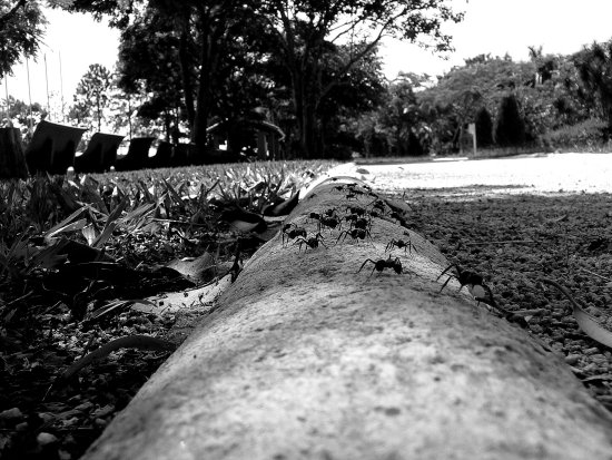 park nature animals ant bw