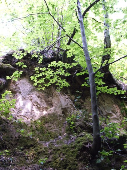 tree forrest nature