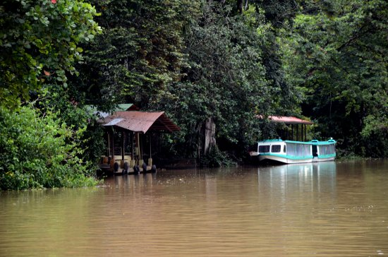 zuiderdam cruise puertolimon costarica jungle boat house river