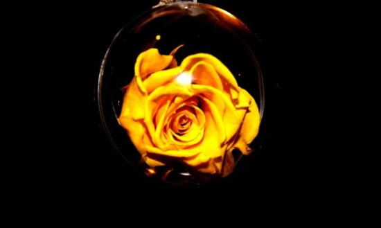 yellow rose flowers float bubbles