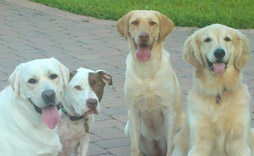Dog trainer miami Dog trainers in miami Dog trainers miami