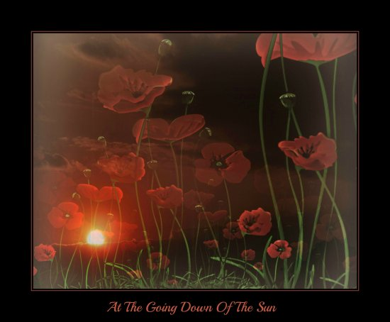 remembrance poppies sunset