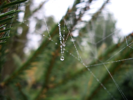 spiderweb drops