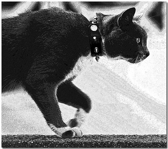 cat wall bw stalking