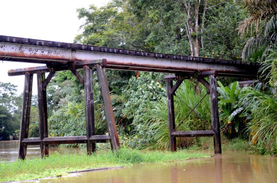 zuiderdam cruise puertolimon costarica jungle railroad bridge