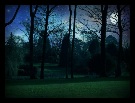 Trees night time