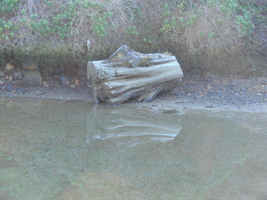 reflectionthursday tree stump bay otago harbour dunedin littleollie