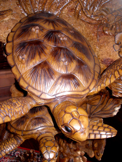turtle multiplying in wood