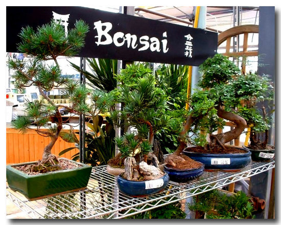 Bonsai Plant Tree Small Green