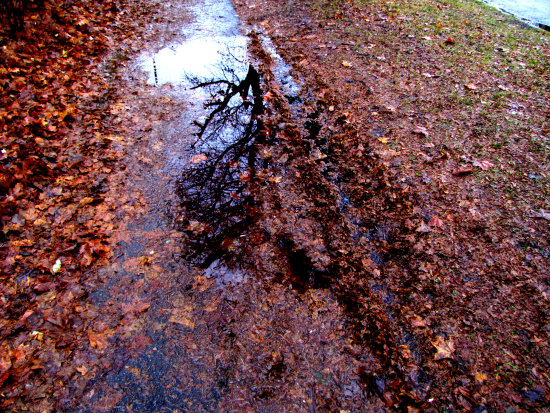 leaves autumn tree reflection