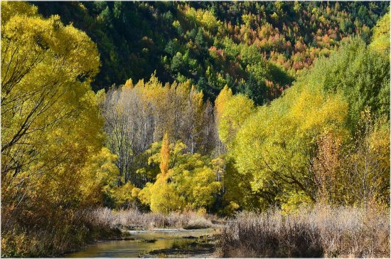 autumn arrowtown newzealand