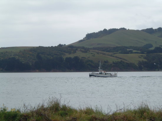 'The Monarch' of Monarch cruises heading for the Albatross Colony at Taiaroa Head, Otago Peninsul...