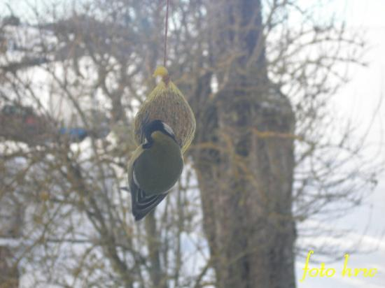 Winter is come so i have feed the birds!