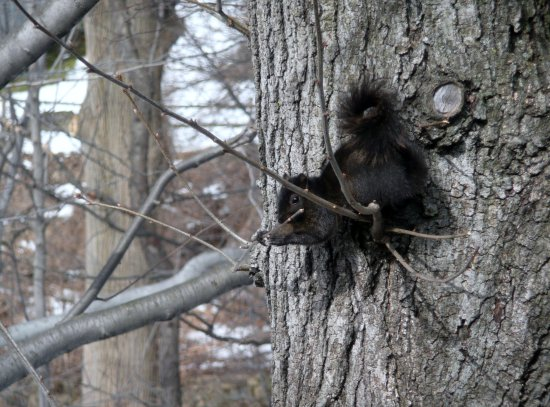 Squirrel tree stick mellie