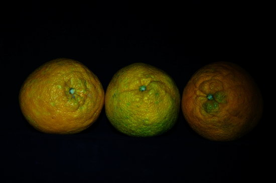 yellow orange green oranges