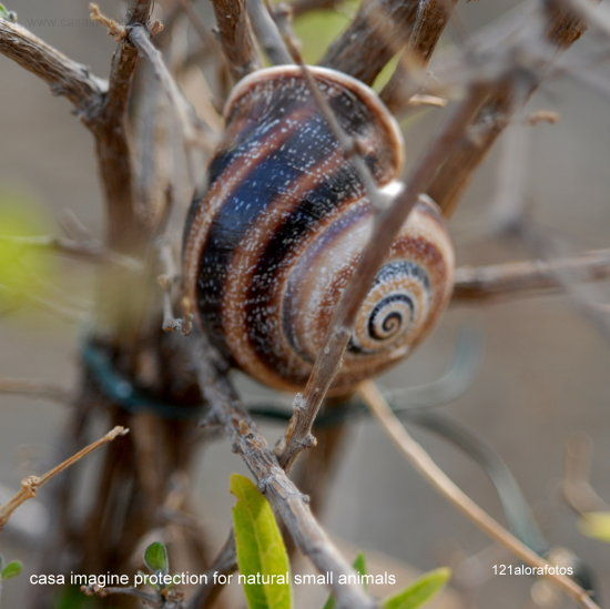casaimagine nature reserve insect retreat holiday