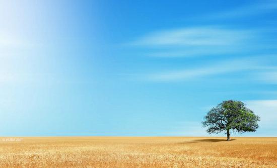tree arbol sky yellow blue field landscape calmnesse peace calma paz arrojo
