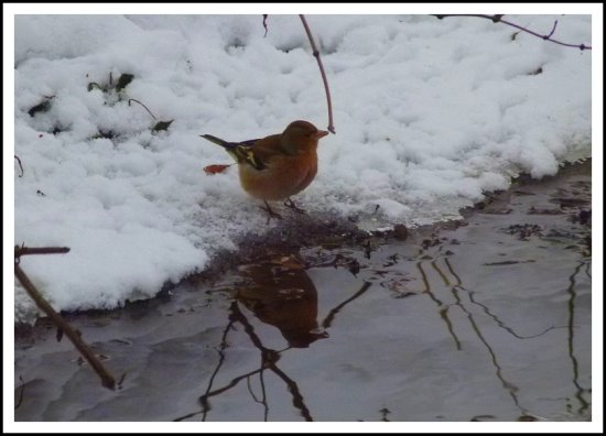 bird snow reflectionthursday