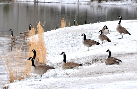 winter goose lake hunting outdoors duck hunting