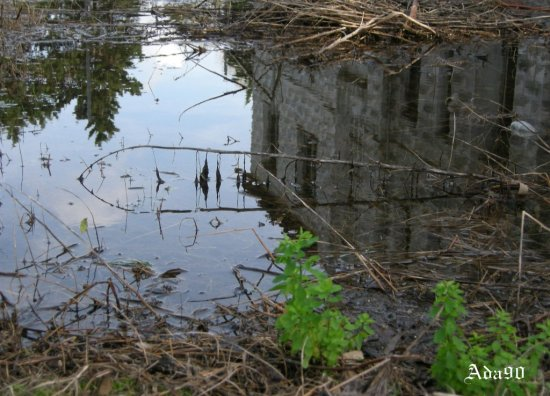 water weed reflection