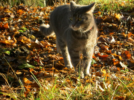 cat nature autumn morning
