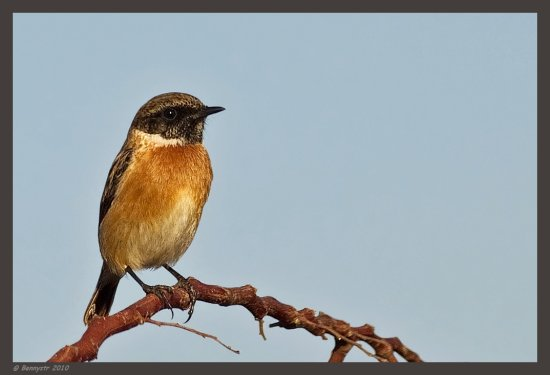 And that's Mr. Stonechat Try the original view  Happy 2011 everyone!