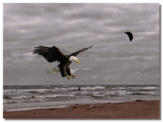 netherlands bergenaanzee water sea bird eagle nethx bergx waten sean birdx