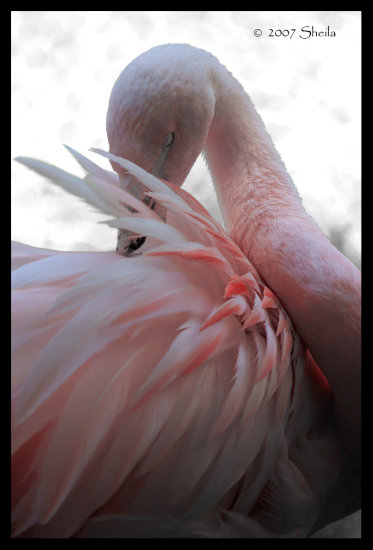 flamingo zoo pink