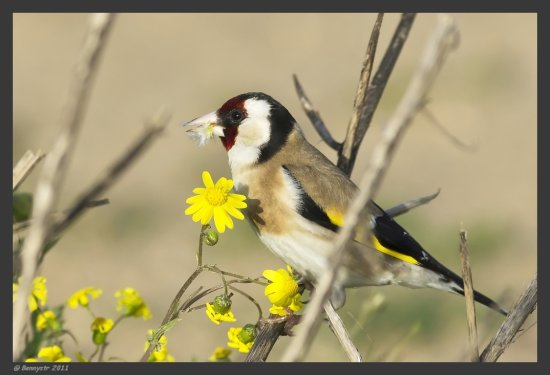 For Jude,  I've promised you a Goldfinch :-)  Try the original view