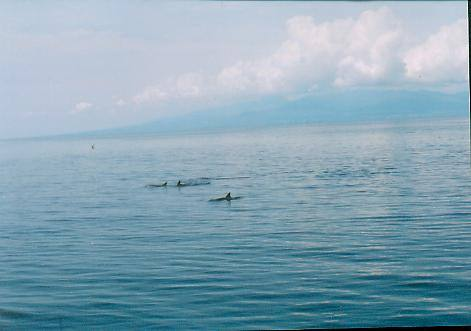 whale watching in Bais City Negros Oriental