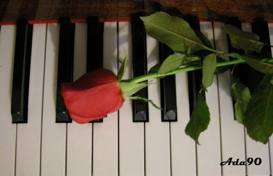 piano flower rose love romance