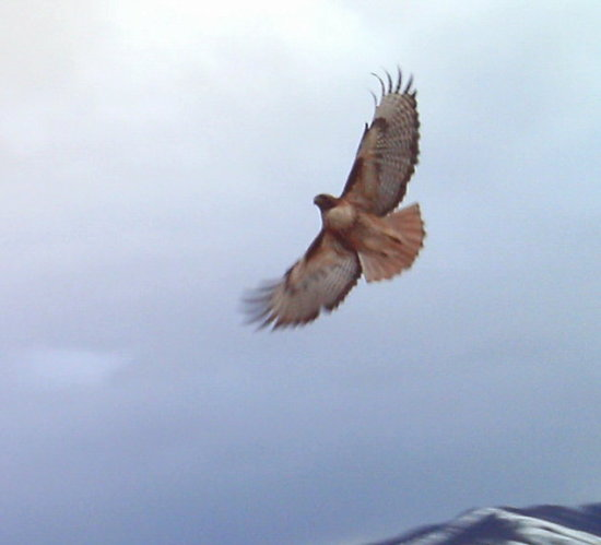 bird flying nature