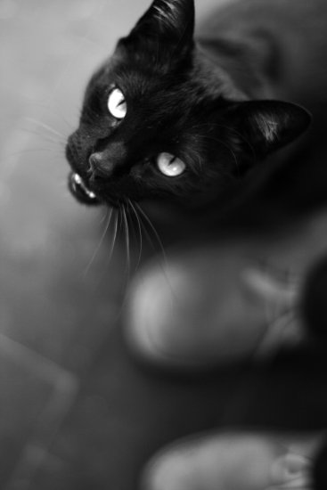 cats bw nelson cat