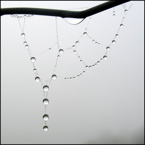 dew drop spiderweb france fence