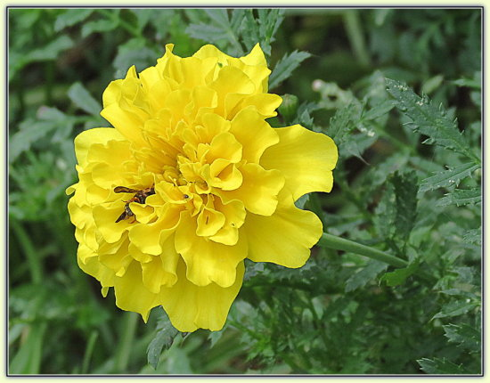 I haven't posted a yellow flower lately.  I like to change my front page every so often, but all ...