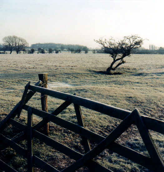 Frost Winter Countryside