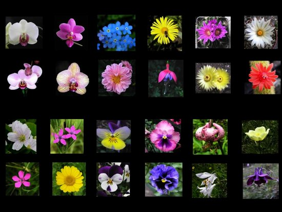 Series Flowers Collages