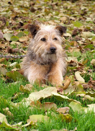 dog autumn animal